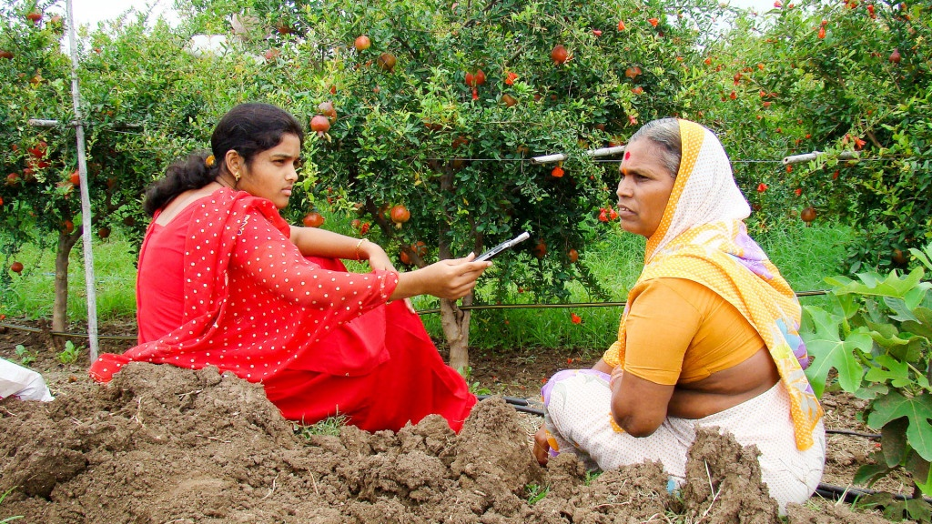 KVK Pravara CRS Interview of a woman pomegranate grower for radio programme